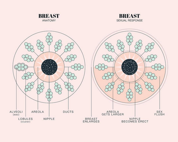 The 5 Step Breast Self-Exam